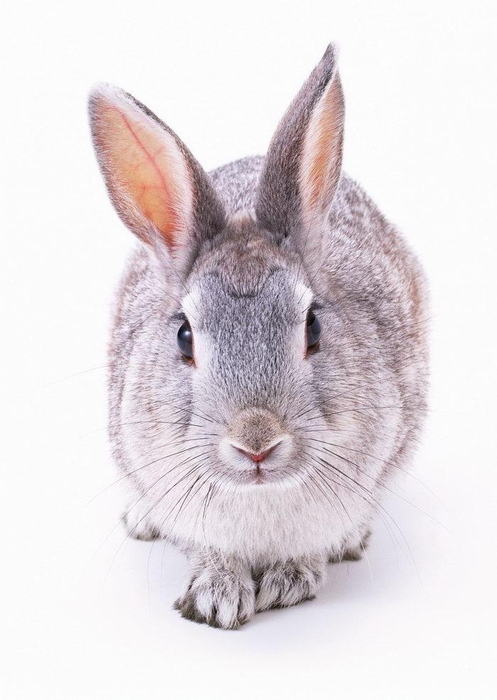 壁纸 动物 兔子 700_986 竖版 竖屏 手机