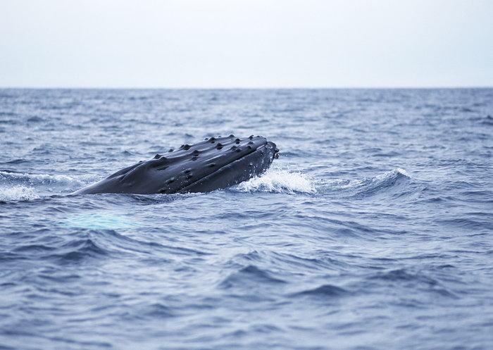 世界上最可爱的蓝鲸