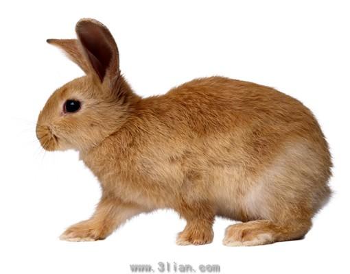 奔跑的兔子图片,奔跑的兔子,兔子,家禽,家畜,动物,3564x2793像素