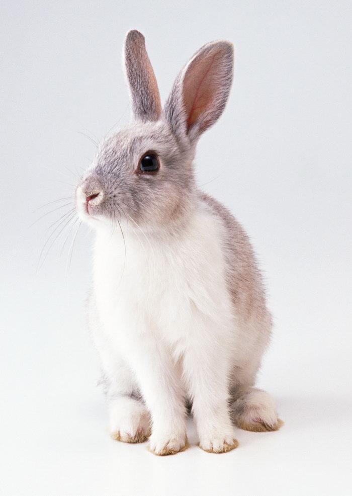 小白兔图片-素彩图片大全