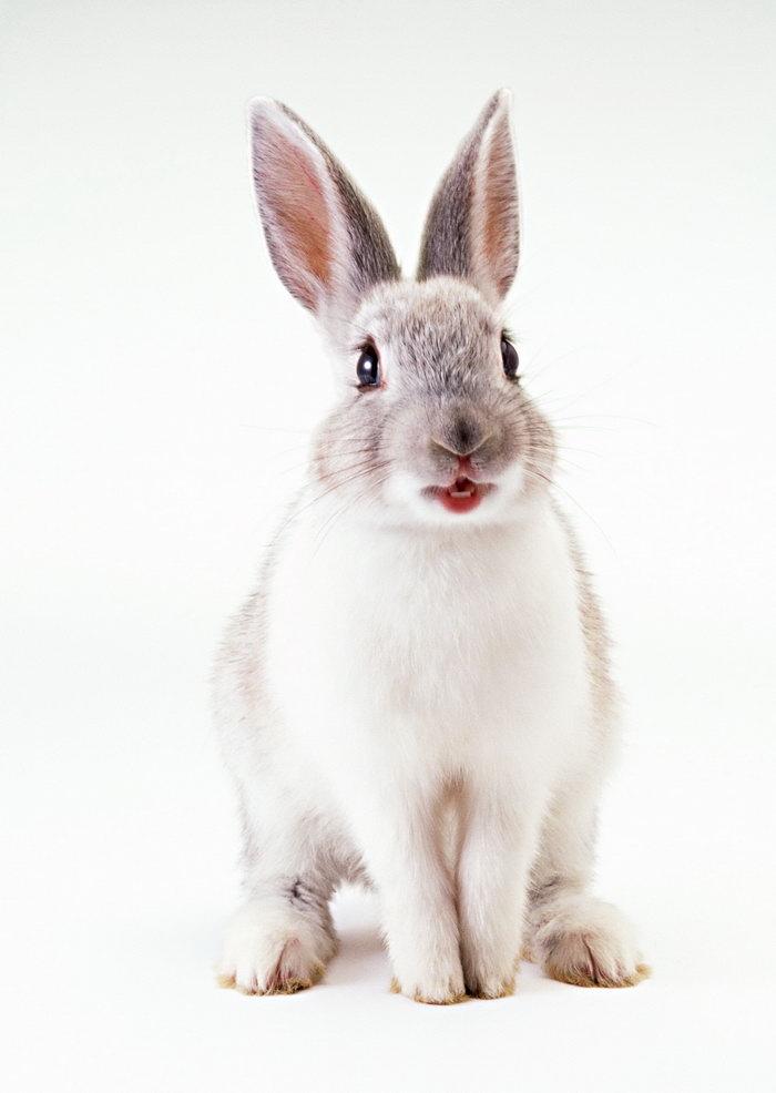 兔子图片-素彩图片大全
