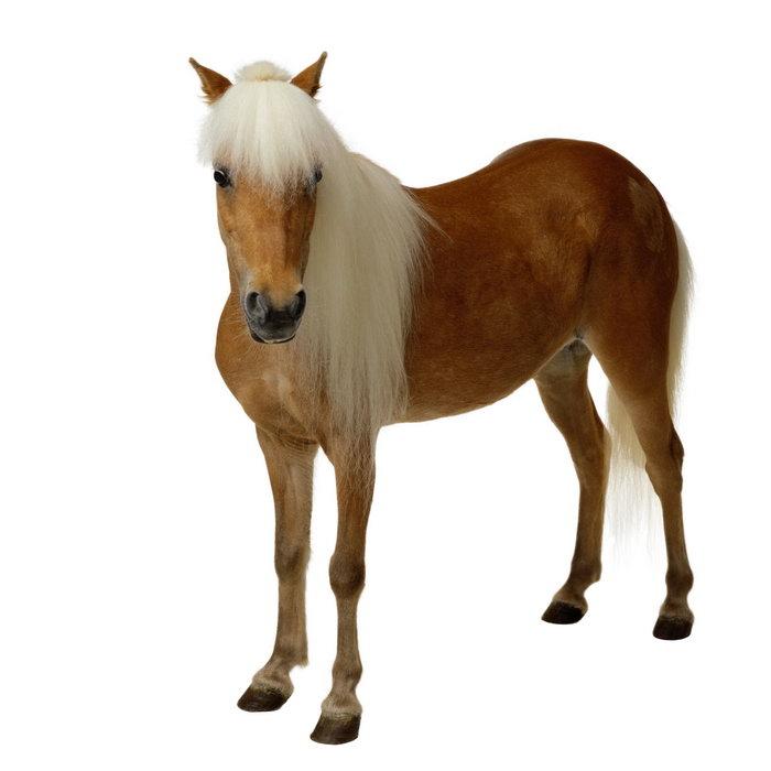 马动物图片