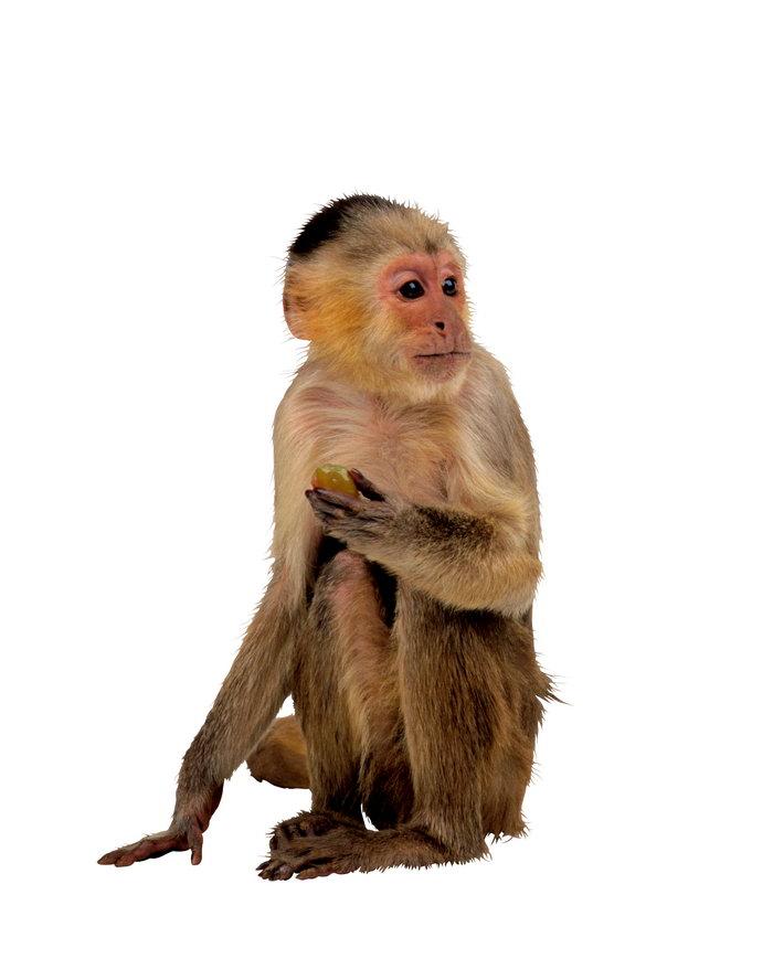 可爱猴子图片,可爱猴子,野生动物,摄影,动物,2802x3554像素