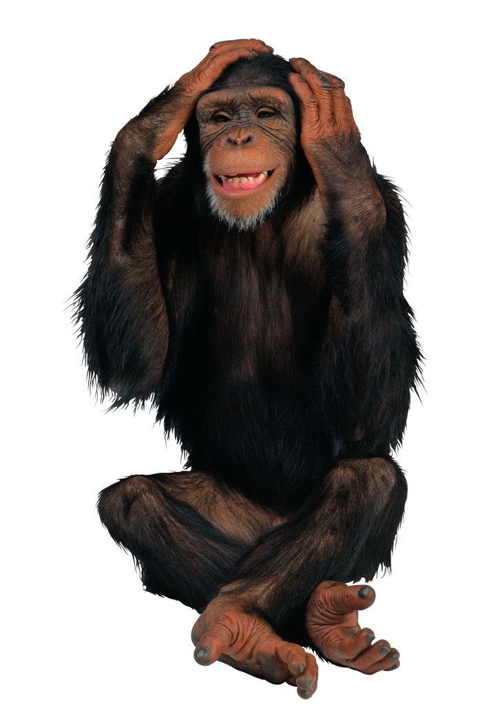 u53ef u7231 u7334 u5b50 u56fe u7247  u7d20 u5f69 u56fe u7247 u5927 u5168 baby monkey clip art free baby monkey clip art free
