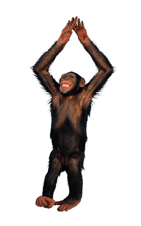 搞笑的猴子图片