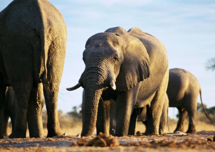大象图片-素彩图片大全