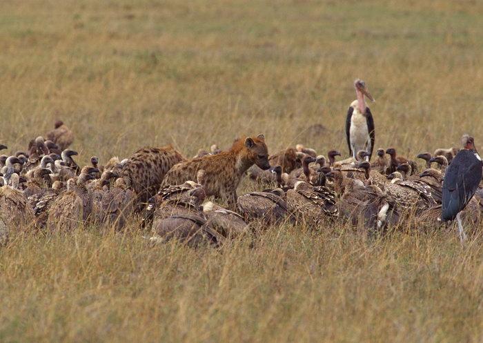 野生动物图片-素彩图片大全