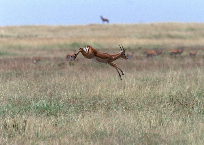 奔跑的鹿图片