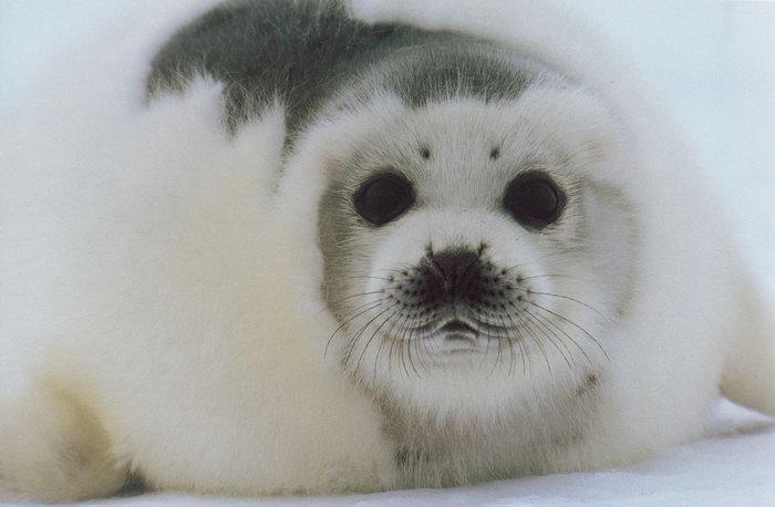 动物北极熊图片-素彩图片大全