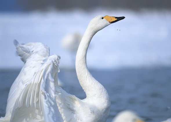 飞禽,动物图片,飞禽世界图片,飞禽,动物,世界