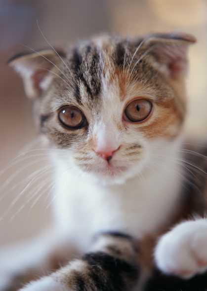 壁纸 动物 猫 猫咪 小猫 桌面 419_590 竖版 竖屏 手机