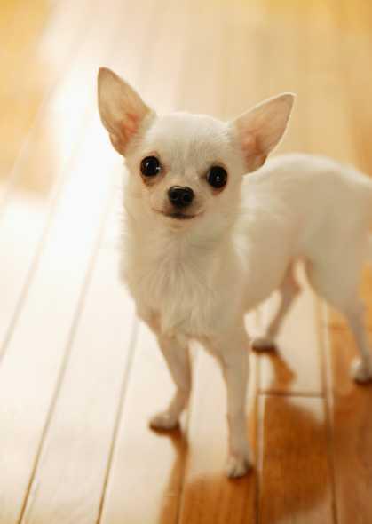 小狗图片-素彩图片大全
