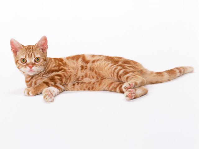 小猫图片-素彩图片大全