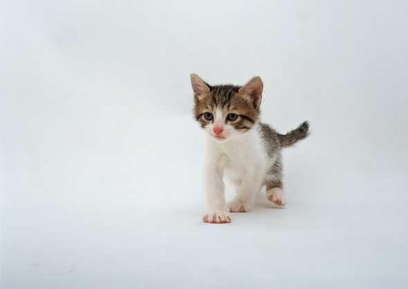 壁纸 动物 狗 狗狗 猫 猫咪 小猫 桌面 590_419