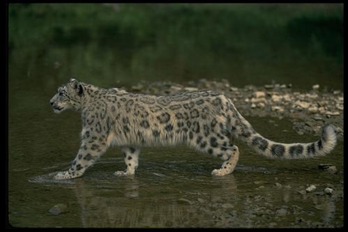 爬行动物394