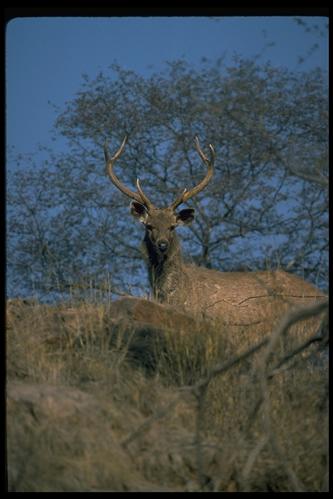 爬行动物353-素彩图片大全