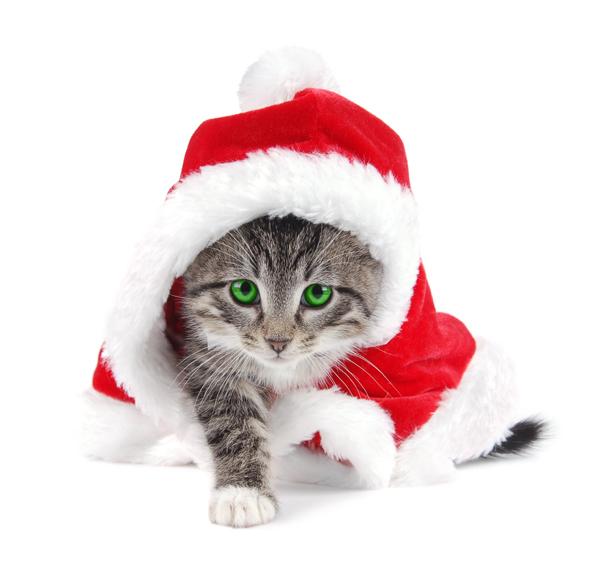 可爱圣诞小猫图片