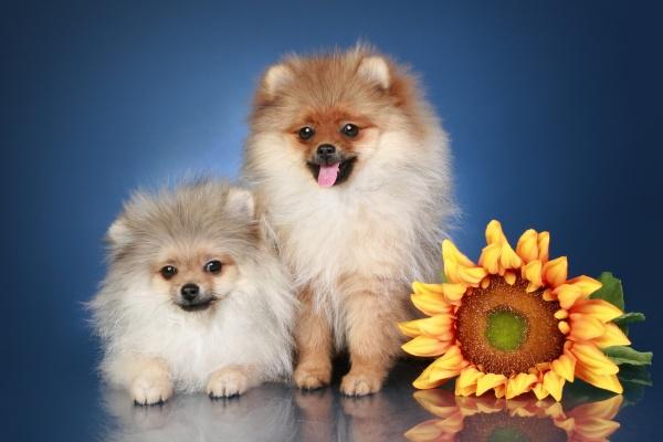 动态小狗图片-素彩图片大全