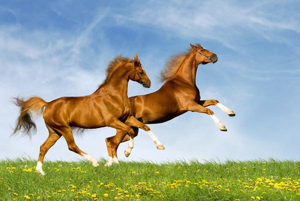 飞奔的马图片,动物图片,动物,飞奔