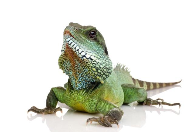 变色龙图片,动物图片,变色龙,野生动物,保护动物,拯救动物,动物