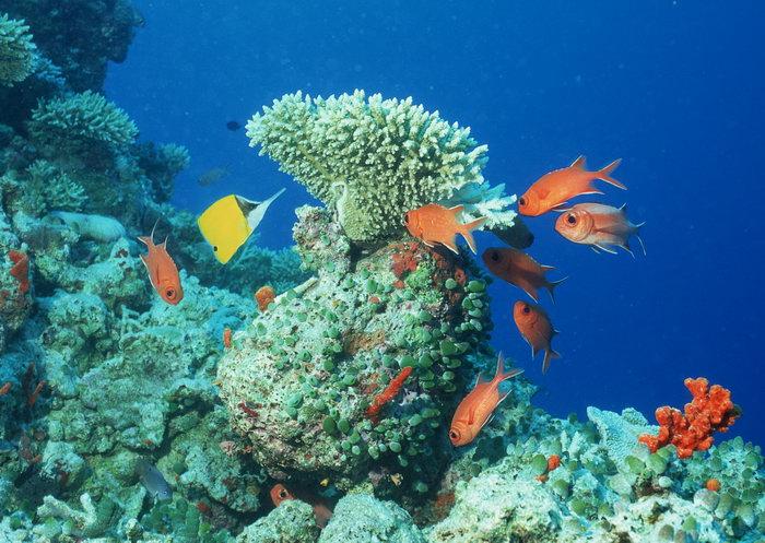 海洋珊瑚简笔画