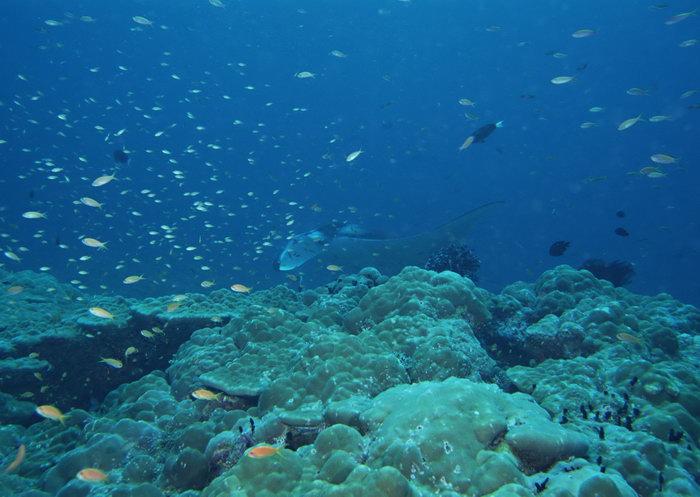 海洋鱼群图片,海洋鱼群,海底世界,摄影,海底生物,2950x2400像素