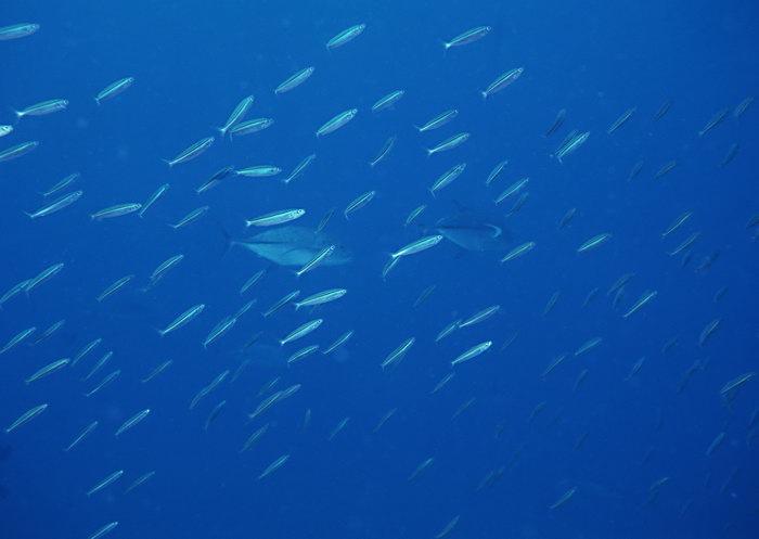 海洋鱼图片,海洋鱼群,海底世界,摄影,海底生物,2950x2400像素