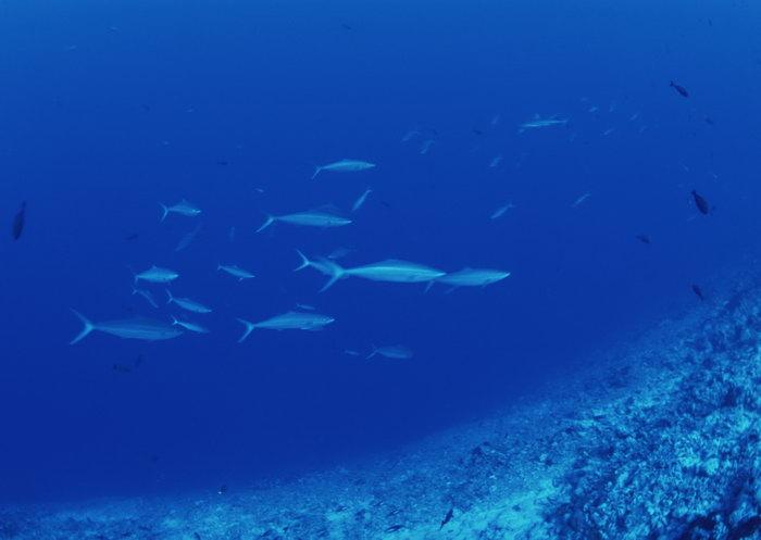 鲨鱼群图片,鲨鱼群,海底世界,摄影,海底生物,2950x2400像素