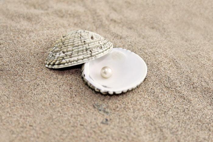 扇贝珍珠沙滩图片,扇贝,珍珠,沙滩,海洋动物,海底世界,摄影,海洋生物