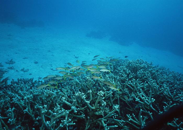 珊瑚鱼群图片,珊瑚鱼群,海底世界,摄影,海底生物,2950x2400像素