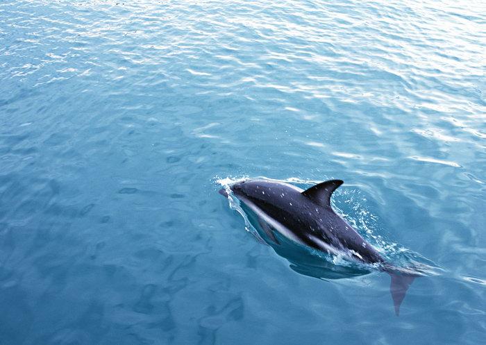 海豚海洋动物图片
