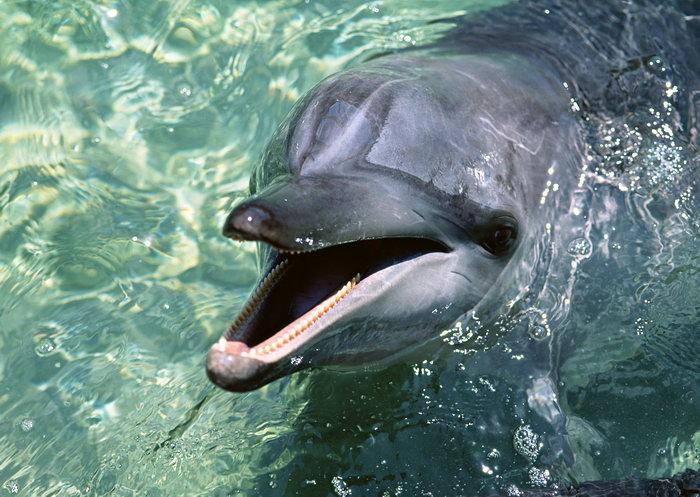 海洋动物,海豚图片,海洋动物,海豚海底动物,2950x2094像素