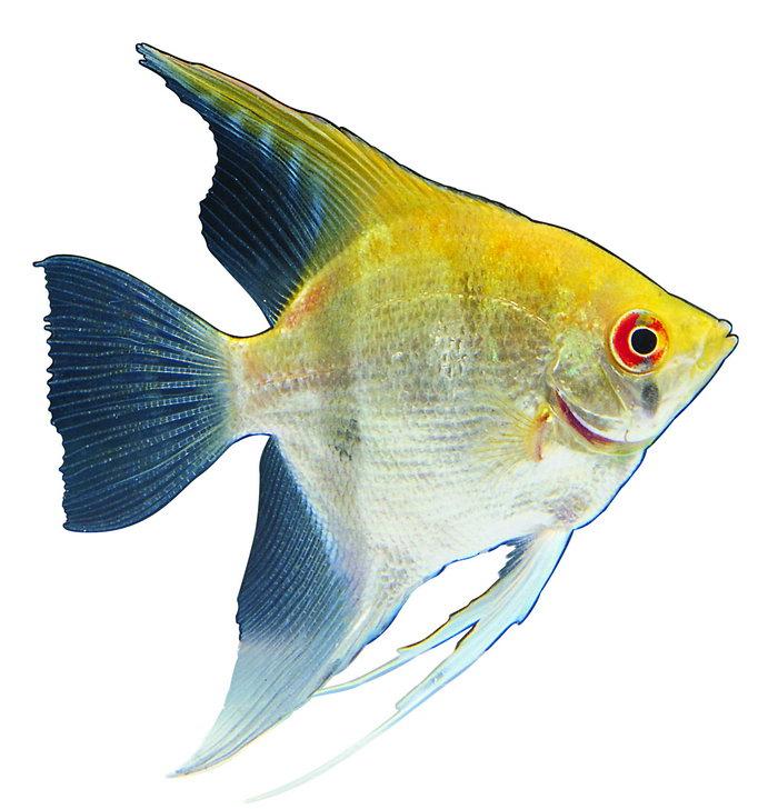 热带鱼海洋生物图片
