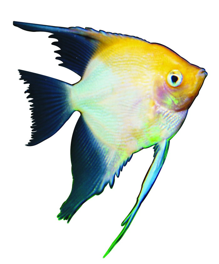 观赏鱼海底生物图片