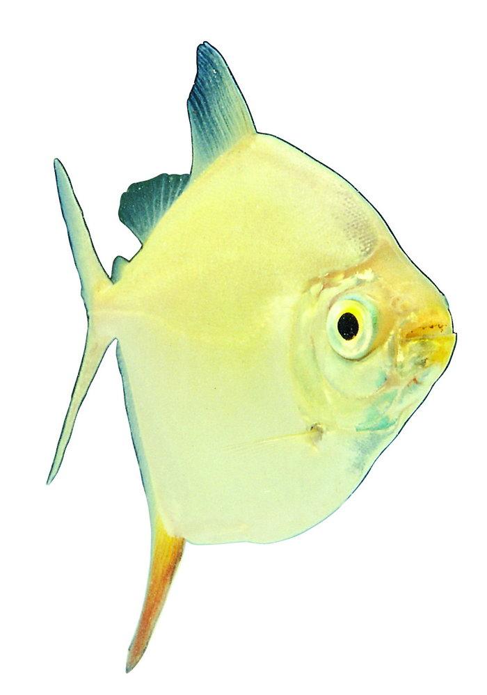 热带鱼类图片-素彩图片大全