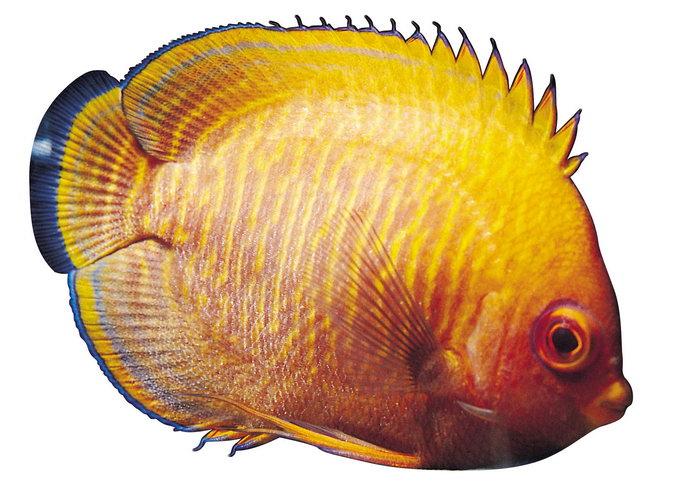 海洋生物热带鱼图片