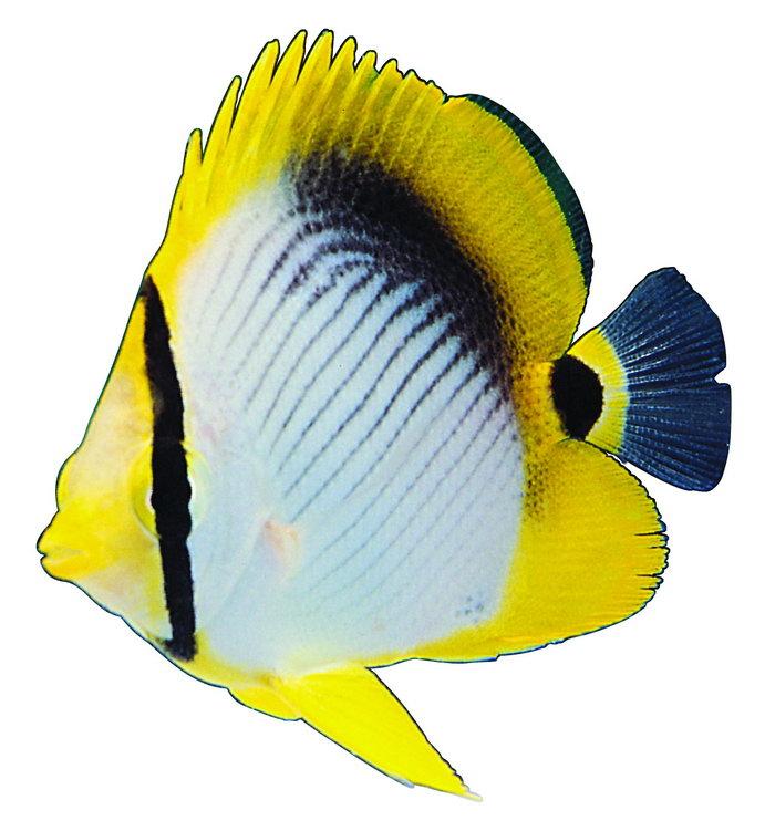 海洋热带鱼图片