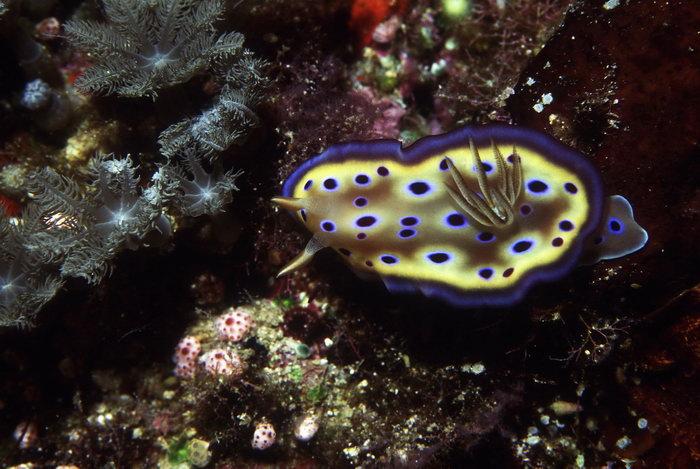 海底珊瑚图片-素彩图片大全