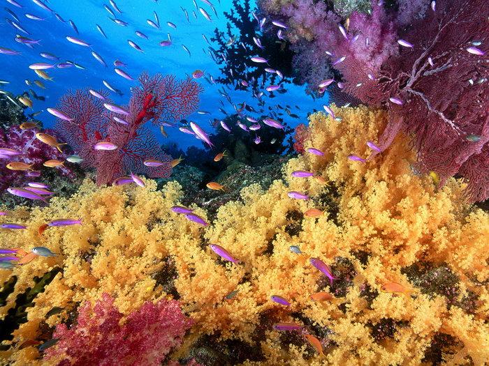 海底世界图片,海底世界,海洋动物,海底世界,摄影,海洋生物,1600x1200