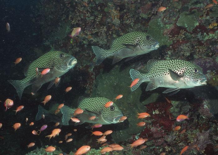 海底鱼类图片-素彩图片大全
