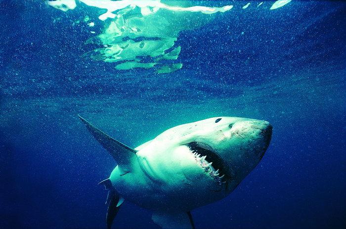 深海鲨鱼图片,深海鲨鱼,海底动物,2825x1868像素