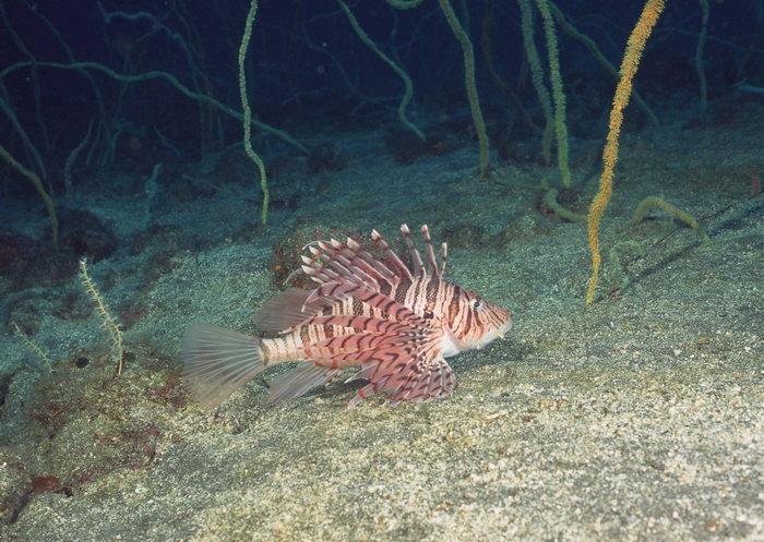 海底鱼图片,海底鱼海底动物,2950x2094像素
