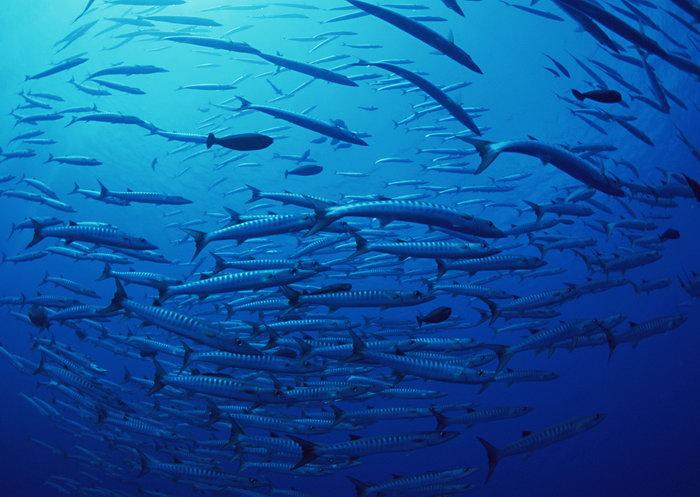 海洋群鱼图片图片