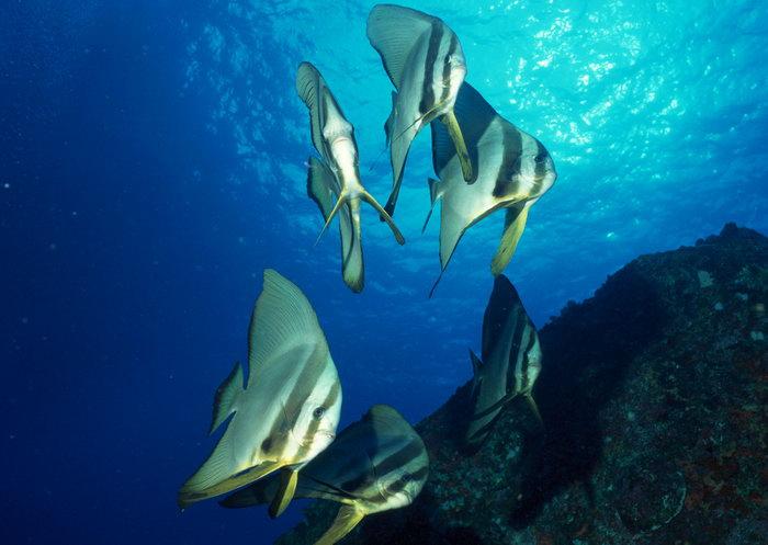 海洋鱼类图片,海洋鱼类,海底动物,2950x2094像素