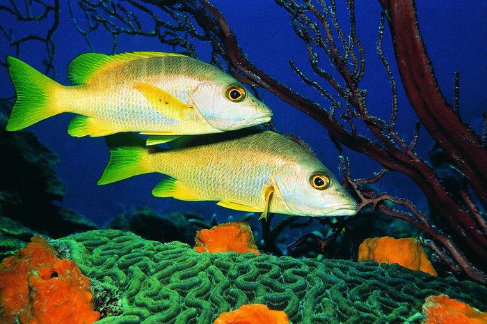 搜集一些海底的动物或植物的画