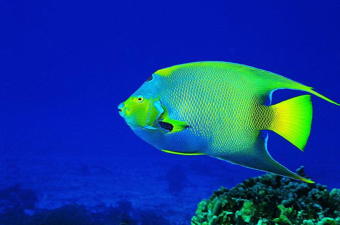 鱼海洋动物图片