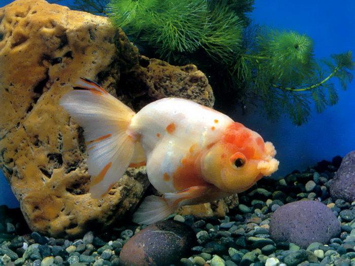 壁纸 动物 海底 海底世界 海洋馆 水族馆 鱼 鱼类 700_525