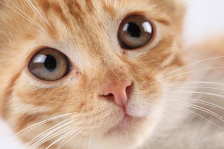可爱猫咪图片-素彩图片大全