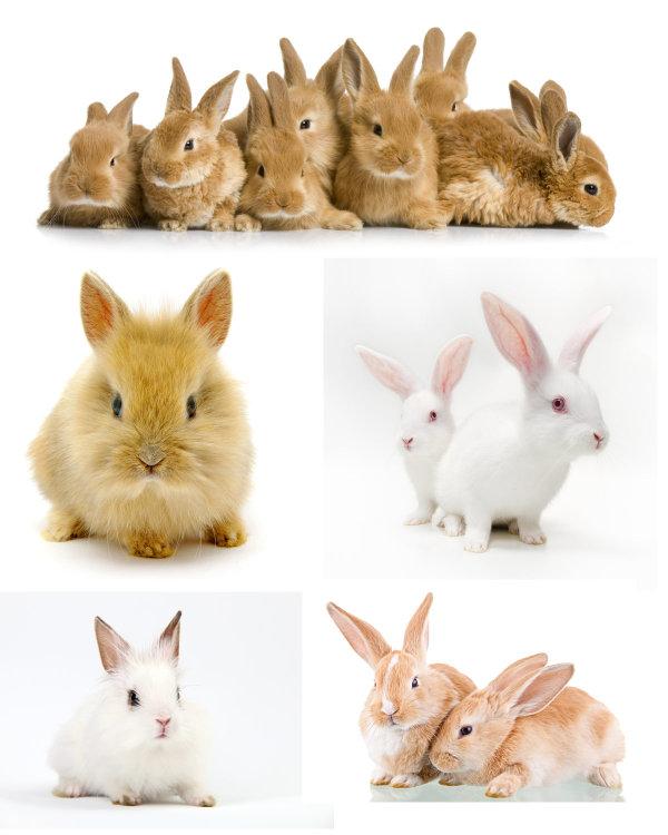 可爱的小兔子2图片