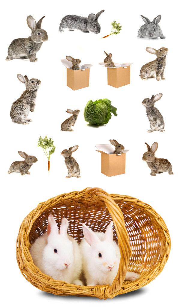 小兔子图片-素彩图片大全
